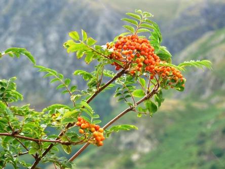 Lake District 023