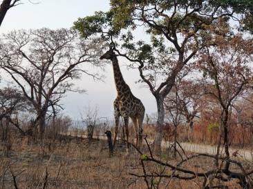 Africa 2012 119