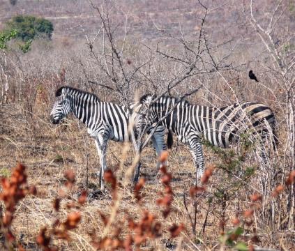 Africa 2012 141
